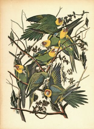 The Birds of America. John James AUDUBON